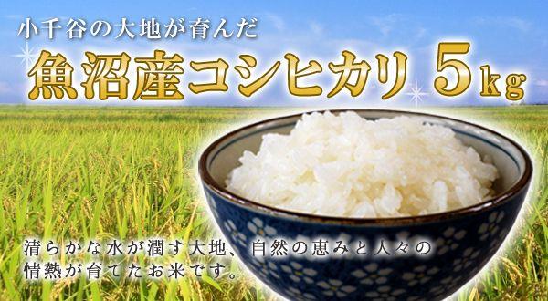画像1: 【新米】魚沼産コシヒカリ 5kg