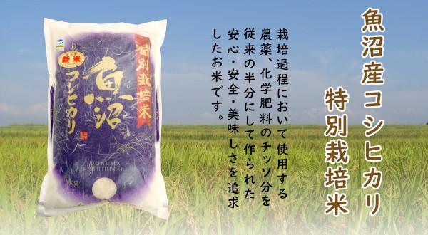 画像1: 【定期購入・送料込】魚沼産コシヒカリ特別栽培米
