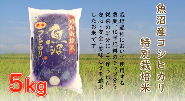 画像1: 魚沼産コシヒカリ特別栽培米 5kg