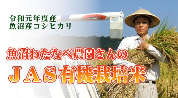画像1: 魚沼わたなべ農園のJAS有機栽培米 (精米) 5kg